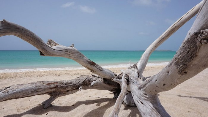 wood on the beach on Boa Vista
